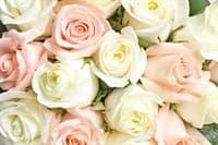 Обои PHOTO DECOR Белые и Розовые 1846 2,7*3м