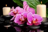 Обои PHOTO DECOR Фиолетовая орхидея 178 2*2,7м