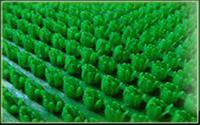 Покрытие ковровое KOVROFF щетинистое в рулонах 15*0,9м арт.163 Зеленый