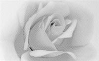 Декор UNITILE Камелия черн. 02 250*400