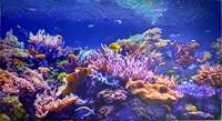 Фартук-панно ГРЕЙС Коралловый риф! 602*1002мм ТП1001554