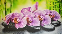 Фартук-панно ГРЕЙС Орхидея Ванда! 602*1002мм ТП10019558